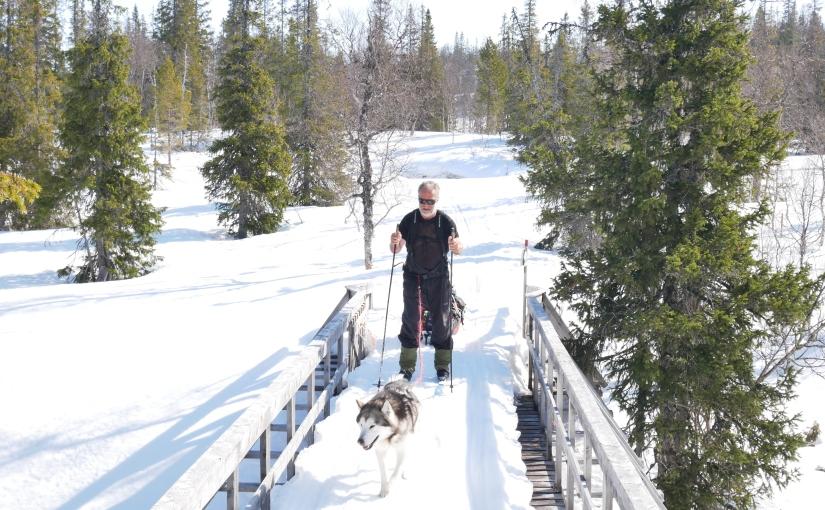 Dag 54: Fra Gjefsjø fjellgård til Tor på Snåsa og videreheim