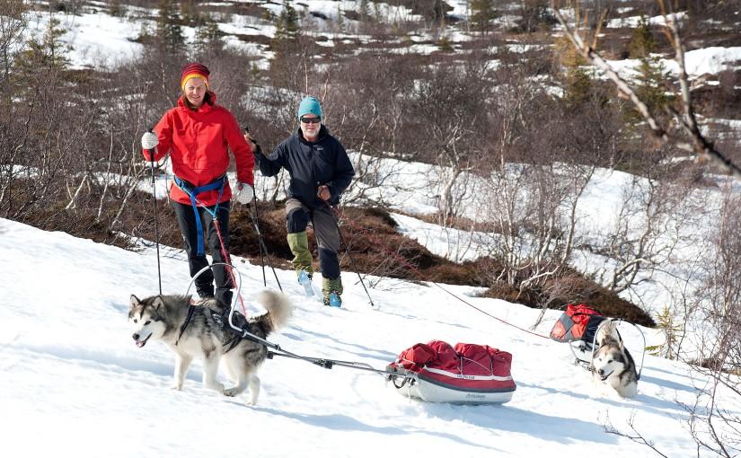 Erfaringer med hund på langeturer