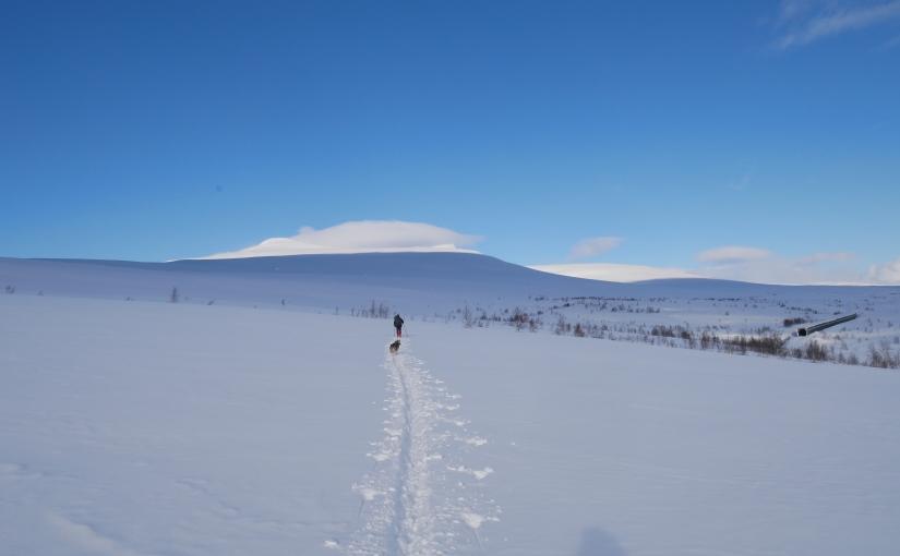 Dag 76: Saltfjellet