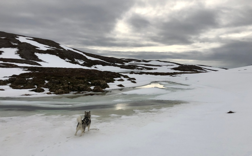 Dag 112: Siste skitur på strekningen fra Repvågstranda tilHonningsvåg