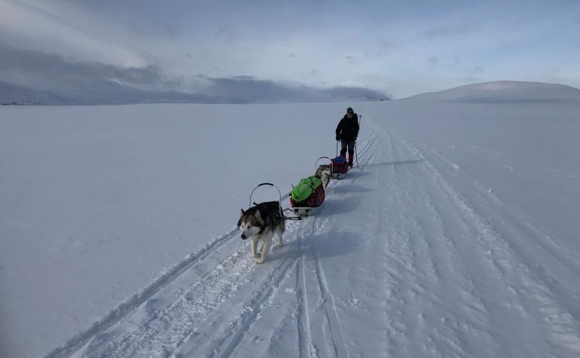 Dag 98: Fra Kilpisjärvi til Unkkajärvi i godtselskap