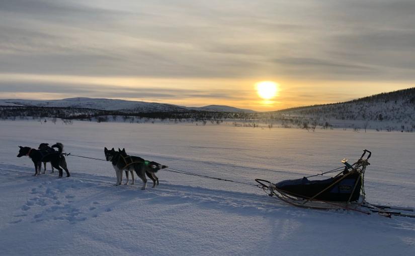 Hundekjøring i Finnmark