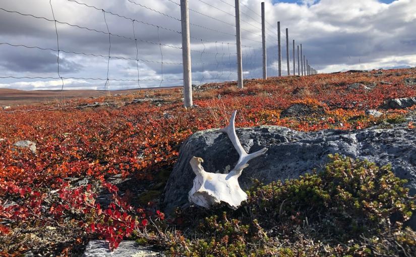E1 dag 27: Folkevandring fra Pitsusjärvi tilKuonjarjoki